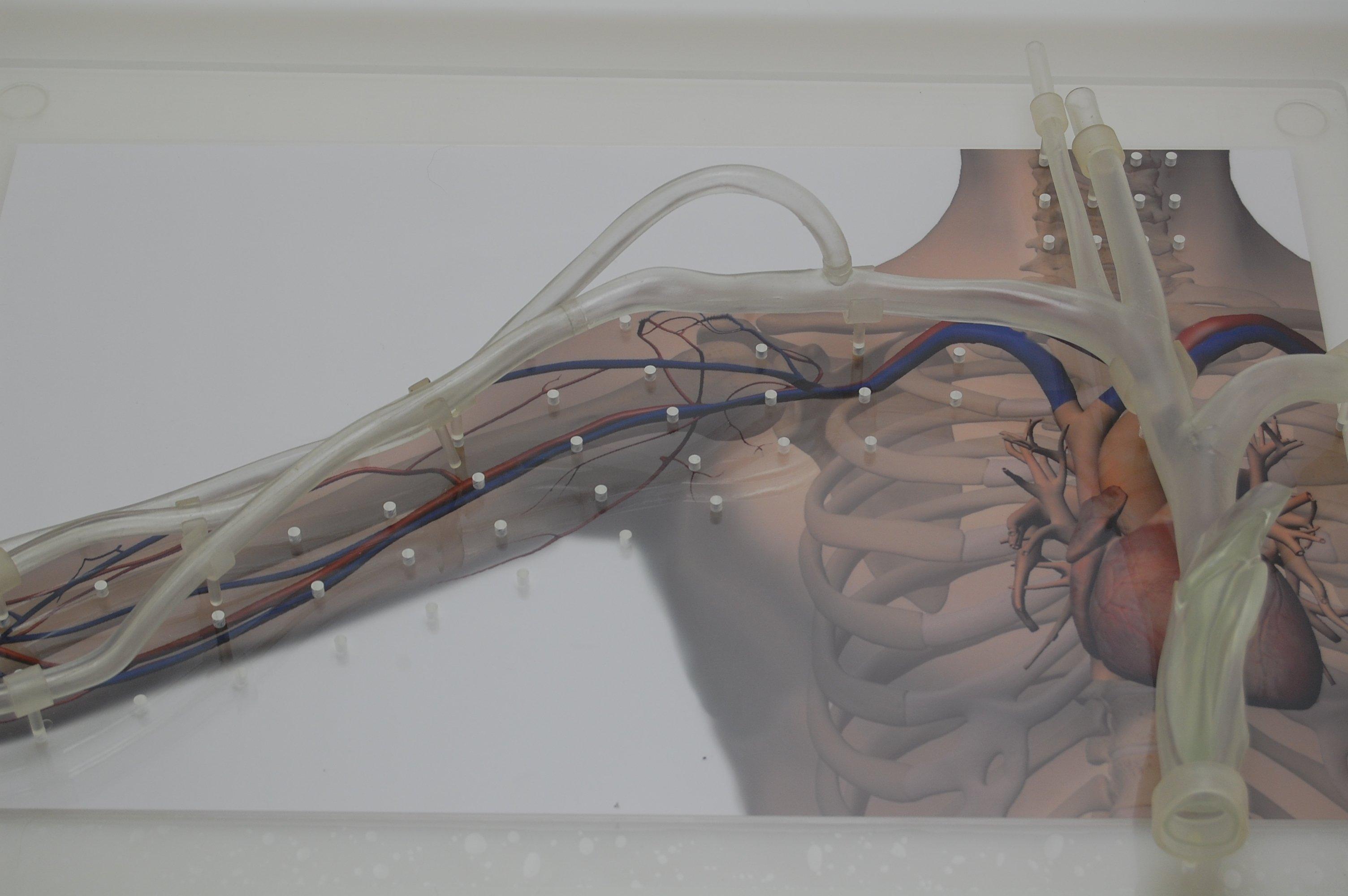 medical device anatomy models | Pulse Medical Demonstration Models