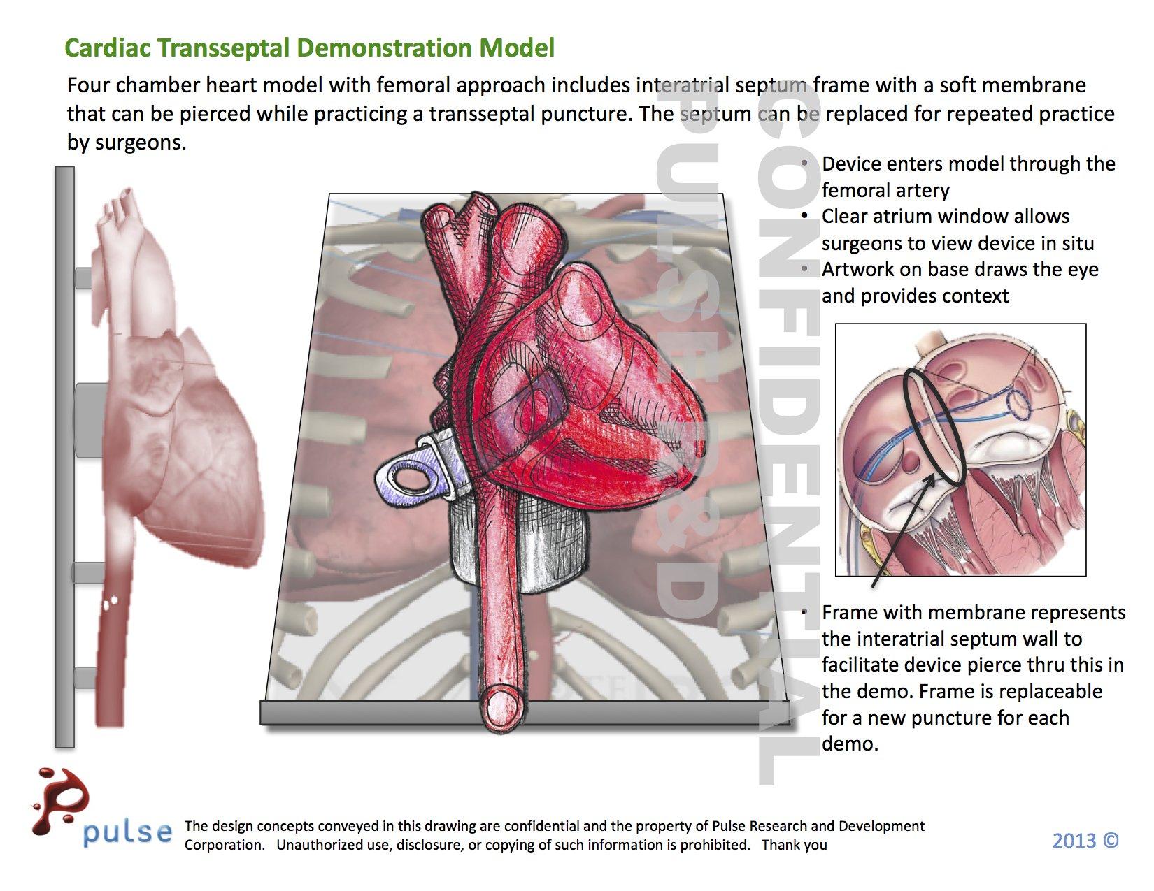 anatomy models | Pulse Medical Demonstration Models